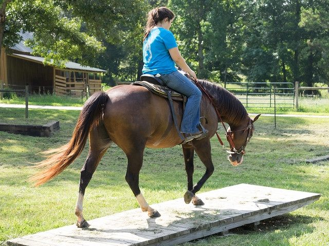 Lambert Stables Obstacles   Winston, GA
